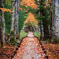 Autumn At Jesup Path by Jesse MacDonald