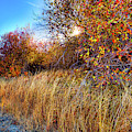 Autumn At Magpie Forest by David Patterson