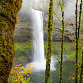 Autumn At Silver Falls State Park by Nicole Young