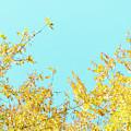 Autumn Beauty IIi by Anne Leven