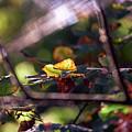Autumn Beginnings by Whitney Goodey