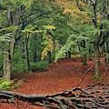 Autumn Blanket by Daniel McNamara