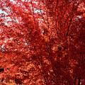 Autumn Blaze by Kae Cheatham
