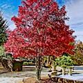 Autumn Celebration by Allen Nice-Webb