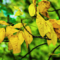 Autumn Color Yellow by Edward Peterson