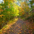 Autumn Colorful Trail by Christopher Shellhammer
