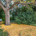 Autumn Colors - Capitol Grounds by Dale Powell