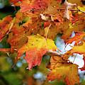 Autumn Colour by Lenore Locken