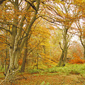 Autumn Colours by Victor Lord Denovan