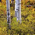 Autumn Contrasts by John De Bord