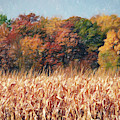 Autumn Cornfield by Don Northup