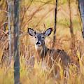 Autumn Deer by Lori Dobbs