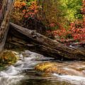 Autumn Dogwoods by TL Mair