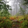 Autumn Fog  by Chance Kafka