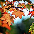 Autumn Fun by Bill Posner