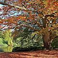Autumn Glow by Gill Billington
