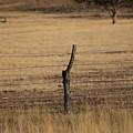 Autumn Grass In Utah by Colleen Cornelius
