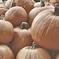 Autumn Harvest by JAMART Photography