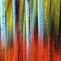 Autumn In Color by John De Bord