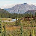 Autumn In Denali by David Frankel