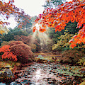 autumn in Japanese park, the Hague by Ariadna De Raadt