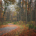 Autumn Journey No. 1 by Simmie Reagor