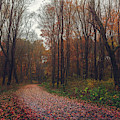 Autumn Journey No. 2 by Simmie Reagor