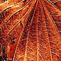 Autumn Leaf Macro by VIVA Anderson