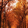 Autumn Lights At Groeneveld by Tashina Van Zwam