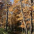 Autumn Merwin Trail by Dylan Punke