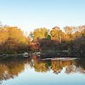 Autumn Mirror - Silky Wavelets Caused By Ducks by Georgia Mizuleva