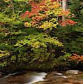 Autumn On The Pemigewasset 2380 by Dan Beauvais
