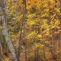 Autumn Panorama by Susan Rissi Tregoning