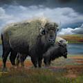 Autumn Plains Bison by Dawn Gemme
