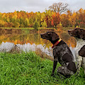Autumn Pondering by Brook Burling