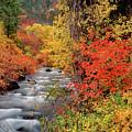 Autumn Rapids by Leland D Howard