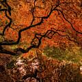 Autumn Reflections by Judi Kubes