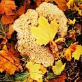 Autumn by Amanda Kessel