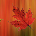 Autumn Spirit Panoramic by Gill Billington