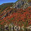 Autumn Splendor by Anthony Dezenzio