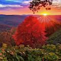 Autumn Splendor At Artist Point - Mountainburg Arkansas by Gregory Ballos