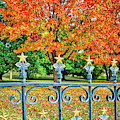 Autumn Stars And Bars At The Texas Capital by Lynn Bauer