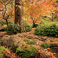Autumn Stream In Lithia Park by James Eddy