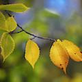 Autumn Whispers II by Harriet Feagin