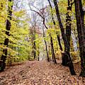 Autumn Woods by Louis Dallara