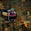 Autumn Woody by James Hardison