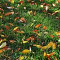 Autumn's Confetti by Kae Cheatham