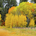 Autumn's Splendor by Susan Warren