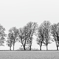 Avenue Of Maple Trees In Fog A Side View In Black And White by Torbjorn Swenelius