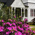 Azalea Blooming Summerville Presbyterian Church by Thomas R Fletcher